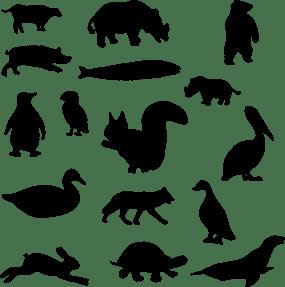 Animal silhoettes
