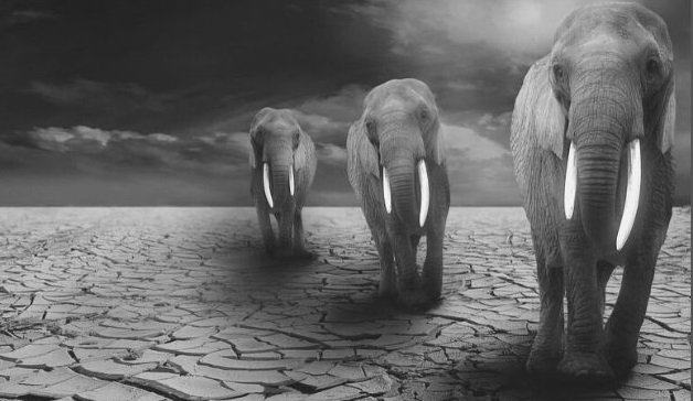 Featured Images - Photo of three elephants on a empty landscape Image from Pixabay