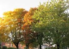 Autumn Trees - 2016