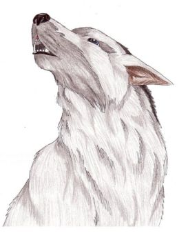 coloured drawn of a wolf's head howling by Ari Meghlen