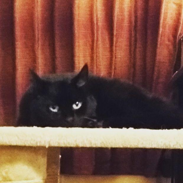 Photo of Black cat, Marvel