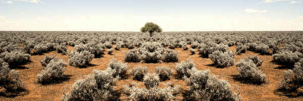 Image: Terrain covered in scrub brush and a single tree