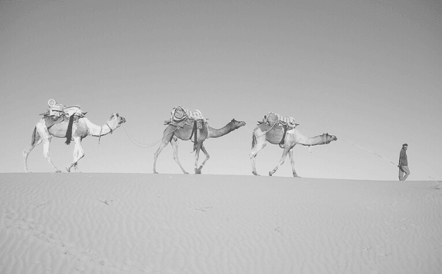 Featured Images - Book Marketing using locations. Image of three camels being lead through the desert