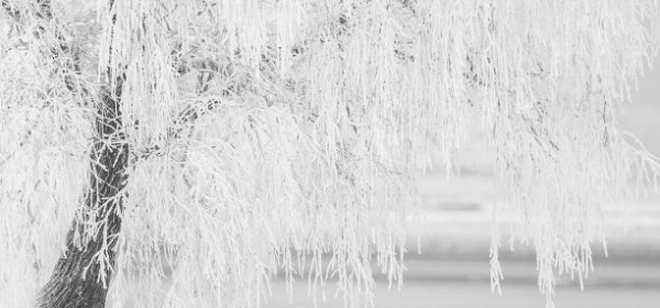Featured Image - Winter image of a tree covered in snow and ice. Image from Pixabay