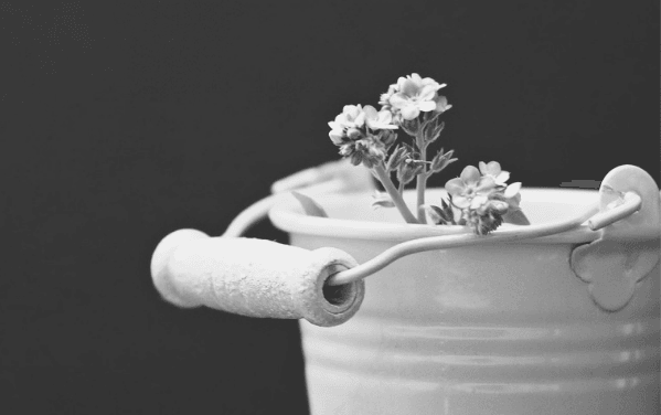 Featured Images - Buckets. Metal bucket full of flowers. Things for your bucket list