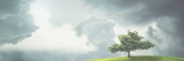 Tree landscape. Pixabay image.