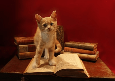 Little ginger kitten stood on an open book with several more old books stacked behind