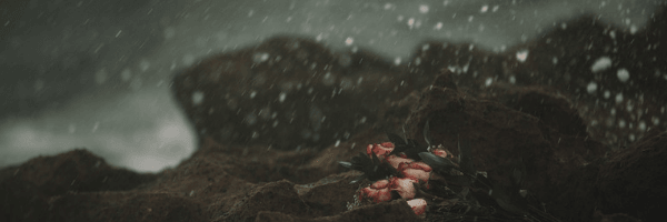 Photo of bunch of pink roses on sharp rocks with a storm raging. Image from Pixabay