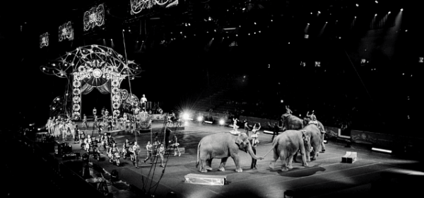 Featured Images - Circus performer, circus animals, carnivals