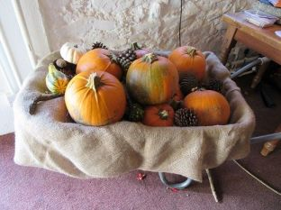 Pumpkins in a wheelbarrow. Pumpkin fest. Castlewellan