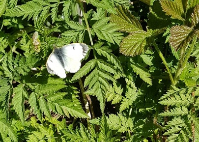 White butterfly on ferns Photo by Mike Dread Pirate 2020