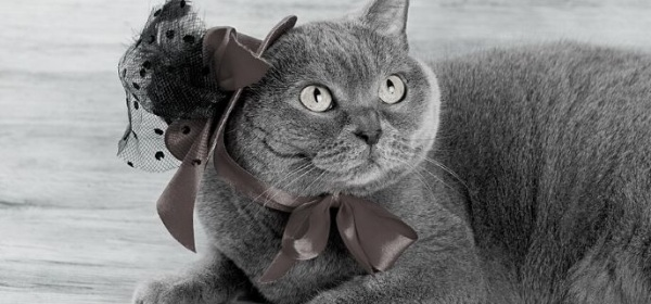 Featured Image - Grey cat with a hat on. Image from StoryBlocks
